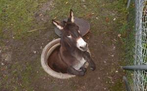 donkey5n-3